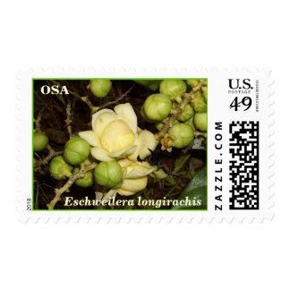 OSA: Eschweilera longirachis Postage