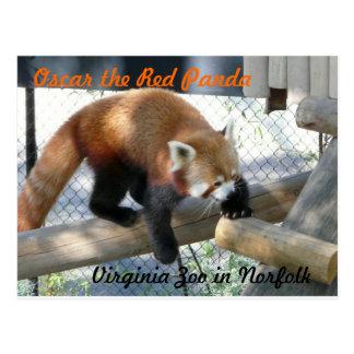 Óscar la panda roja en el parque zoológico de Norf Tarjetas Postales