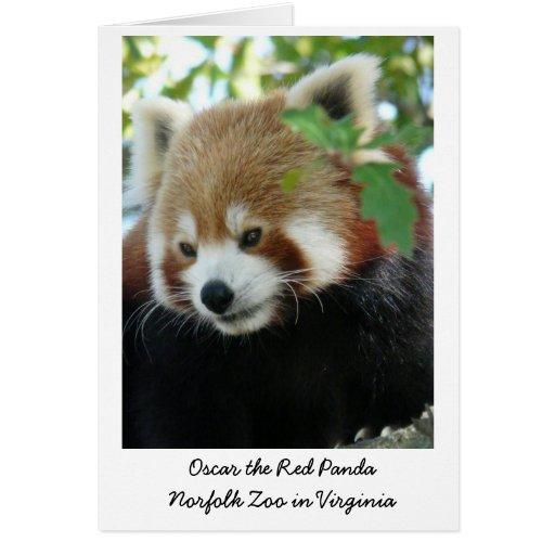 Óscar la panda roja tarjeta de felicitación