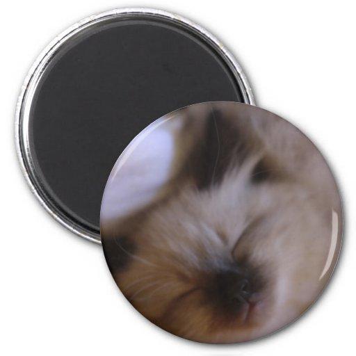 Oscar The Kitten Refrigerator Magnets