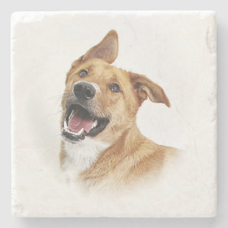Oscar, the lab want to be, coaster