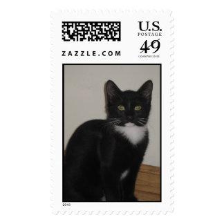 Oscar the tuxedo cat postage