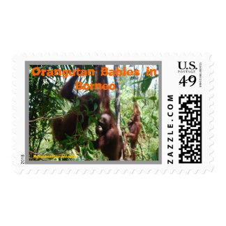 Oscilación de los bebés del orangután en selva estampilla