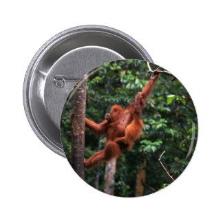 Oscilaciones del orangután pins