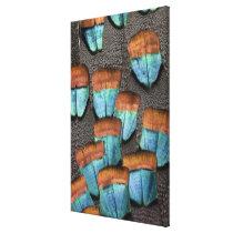 Oscillated Turkey feather pattern Canvas Print