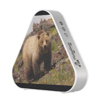oso altavoz bluetooth