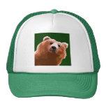 Oso amistoso gorras