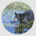Oso-cachorro negro en pantano del verano pegatina redonda