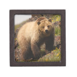 oso caja de joyas de calidad
