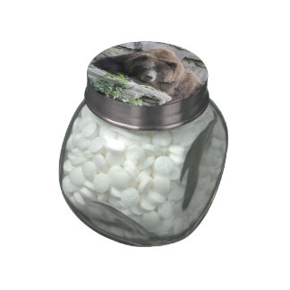 Oso cansado frascos de cristal jelly belly