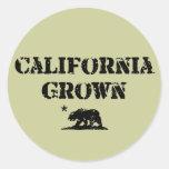 Oso crecido California Pegatina Redonda