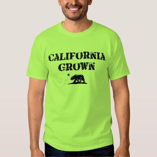 Oso crecido California Poleras