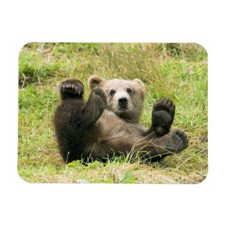 Oso Cub de Alaska Brown que juega el imán flexible