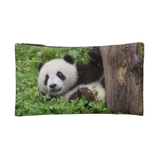 Oso Cub de panda