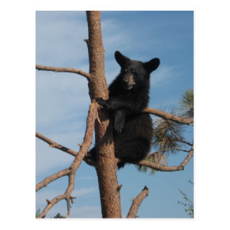 Oso Cub en un árbol Postal