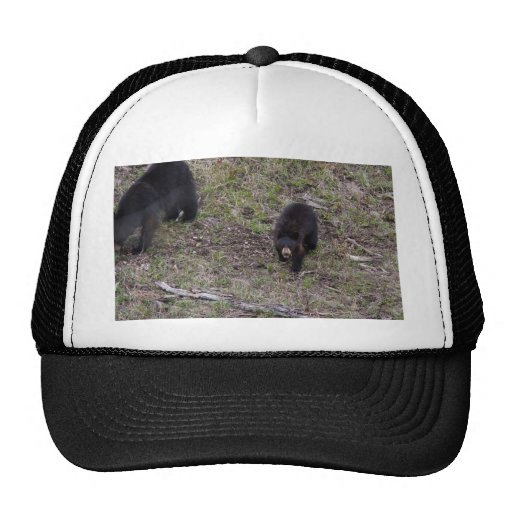 Oso Cub negro Gorro