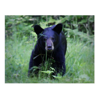 Oso Cub negro lindo que corre en hierba verde Postal