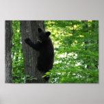 Oso Cub negro lindo que sube en el árbol en bosque Posters