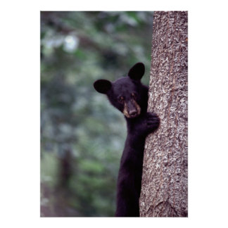 Oso Cub negro Impresiones