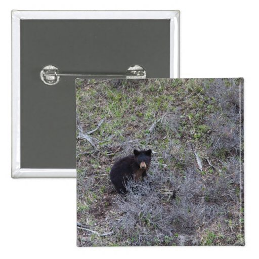 Oso Cub negro Pins