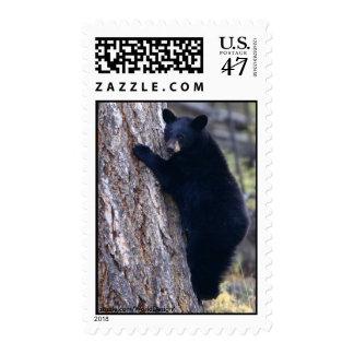 Oso Cub negro Sellos Postales