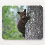 Oso Cub que sube un árbol Alfombrillas De Ratones