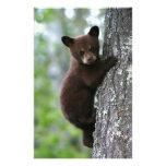 Oso Cub que sube un árbol Papeleria