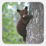 Oso Cub que sube un árbol Pegatina Cuadrada