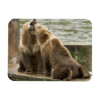 Oso Cubs de Alaska Brown que juega el imán flexibl