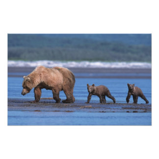 Oso de Brown, arctos del Ursus, península de Alask Fotografía