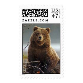 Oso de Brown de Alaska en Kenai NWR Sello