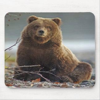 Oso de Brown de Alaska en Kenai NWR Alfombrillas De Ratón