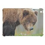 Oso de Brown de Alaska que come el diente de león iPad Mini Carcasas
