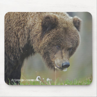 Oso de Brown de Alaska Snacking en un diente de le Tapete De Raton