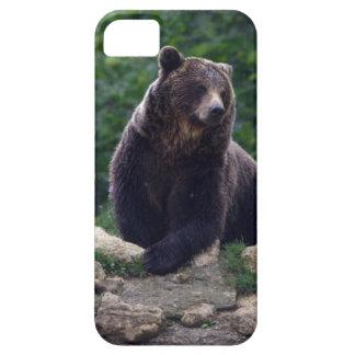 Oso de Brown iPhone 5 Case-Mate Fundas