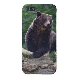 Oso de Brown iPhone 5 Carcasas