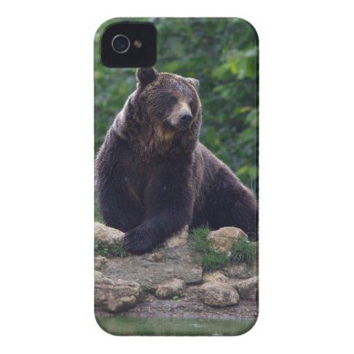 Oso de Brown iPhone 4 Case-Mate Cárcasas