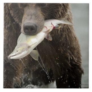 Oso de Brown, o oso grizzly costero, Ursus Azulejo Cuadrado Grande