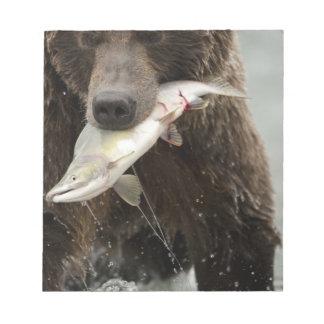 Oso de Brown, o oso grizzly costero, Ursus Bloc
