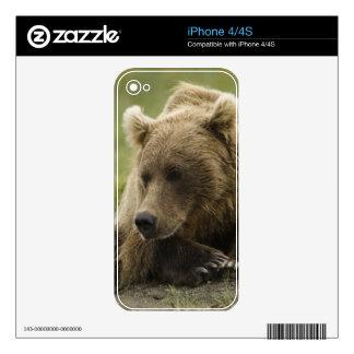 Oso de Brown, o oso grizzly costero, Ursus Calcomanías Para El iPhone 4