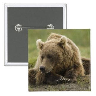 Oso de Brown, o oso grizzly costero, Ursus Pin Cuadrada 5 Cm