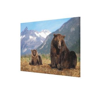 Oso de Brown oso grizzly cerda con el cachorro e Lona Envuelta Para Galerias