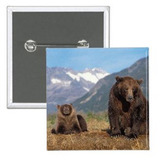Oso de Brown, oso grizzly, cerda con el cachorro e Pin Cuadrada 5 Cm