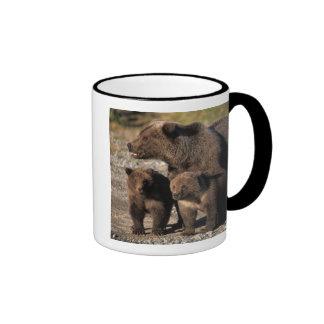 Oso de Brown, oso grizzly, cerda con la mirada de  Taza A Dos Colores