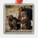 Oso de Brown, oso grizzly, cerda con los cachorros Adorno Navideño Cuadrado De Metal