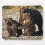 Oso de Brown, oso grizzly, cerda con los cachorros Alfombrillas De Ratón