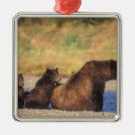 Oso de Brown, oso grizzly, cerda con los cachorros Adornos