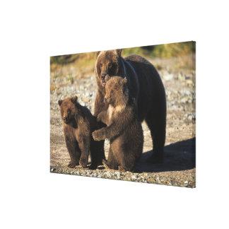 Oso de Brown oso grizzly cerda con los cachorros Impresión En Lona Estirada