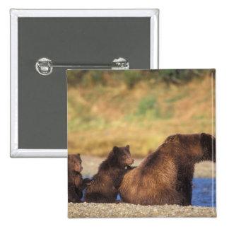 Oso de Brown, oso grizzly, cerda con los cachorros Pin Cuadrada 5 Cm