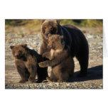 Oso de Brown, oso grizzly, cerda con los cachorros Felicitaciones